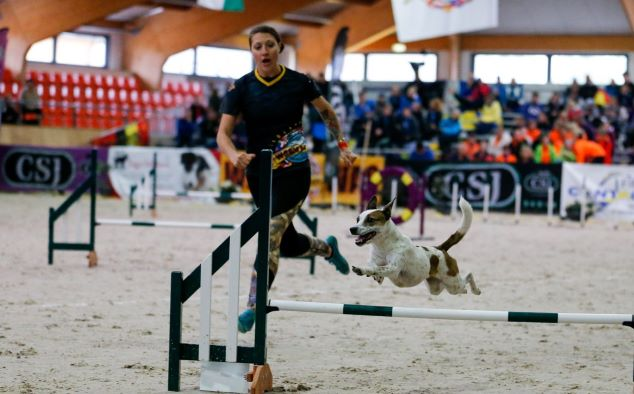World Agility Open livestreaming